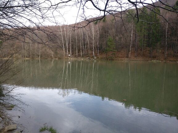 A picture of Boyana lake